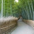Kyoto bamboo grove Stock Image