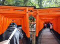 KYOTO, JAPAN - OCT 23 2012: A tourist walks through torii gates Stock Photography