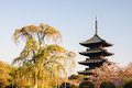 Kyoto, Japan at Toji temple Royalty Free Stock Photo