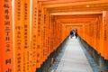 KYOTO - NOV 24 2016 : Torii Gateways in Fushimi Inari Taisha Shr