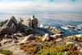 Línea de la playa del Océano Pacífico con las rocas y los arbustos. Imagen de archivo