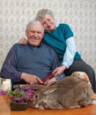 La abuela y el grand-dad se ríen de un conejo Fotografía de archivo libre de regalías