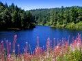 La ensenada con los wildflowers acerca a Gardiner, Oregon Imagen de archivo