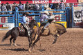 A la fiesta de los vaqueros tucson arizona february the rodeo on february in saddle bronc rider chance barnes aboard Royalty Free Stock Photo