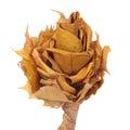 La fleur a effectué des lames d'automne d'ââof Images stock