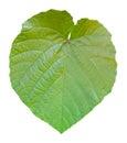 La forme de lame aiment le coeur sur le fond blanc Photos libres de droits