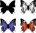 La mariposa fijó 04 Fotografía de archivo