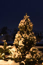 La neige a couvert l'arbre de sapin Image stock
