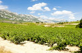 La Rioja, Spain Royalty Free Stock Photos