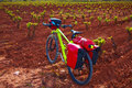 La Rioja vineyard bike The Way of Saint James Royalty Free Stock Photo