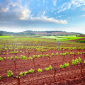 La Rioja vineyard fields in The Way of Saint James Royalty Free Stock Photo