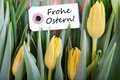 Label with frohe ostern the german words which means happy easter and tulips as easter background Stock Images