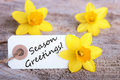 Label with season greetings white on it and yellow daffodil blossoms in the background Royalty Free Stock Photos