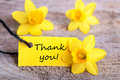 Label with thank you and yellow narcisses Stock Images