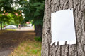 Label on tree pinned blank vertical paper a Royalty Free Stock Images