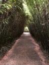 Labirinto della Masone. The biggest bamboo labyrinth in the world. Parma, Italy Royalty Free Stock Photo