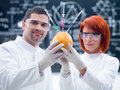 Laboratory grapefruit experiment close up of two researchers in a chemistry lab holding in hands and observing an injected Royalty Free Stock Photography