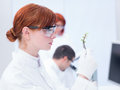 Laboratory plant analysis close up of a student in a chemistry analyzing a Stock Photo