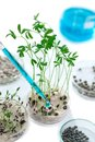 Laboratory workplace for creating modern transgenic plants ,seeds of watercress, lentils, and others collection of plant Royalty Free Stock Photo
