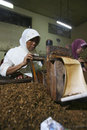 Labour were producing cigarettes in a factory in the city of solo central java indonesia Royalty Free Stock Image