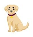 Labrador dog isolated on white background. Vector illustration.
