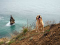 Labrador dog at the sea fidelity Stock Images