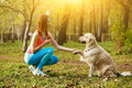 Labrador gives paw to girl Royalty Free Stock Photo