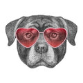 Labrador in Love! Portrait of Rottweiler with sunglasses.