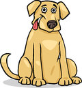 Labrador retriever dog cartoon illustration of funny purebred Royalty Free Stock Image