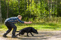 Labrador retriever dog owner trains his on outdoor horizon format Royalty Free Stock Photo