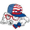 Labrador wearing a cap and a tie. Pedigree dog. Vector dog. Postcard with the Labrador. Hipster.