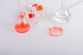 Labware dishes for biochemical experiment in scientist laboratory Stock Photography