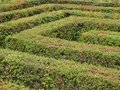 Labyrinth Maze of Orderly Cut Green Bushes Royalty Free Stock Photo