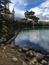 Lac beauvert in jasper canada Royalty Free Stock Images