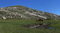 Lac de nino wild horses grazing around second largest lake in corsica and very popular summer hiking destination situated in Royalty Free Stock Images