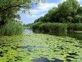 Lac summer avec les lis verts Photos stock