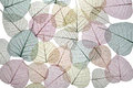 Lacy background of dried autumn leaves in soft pastel colors on lace white Stock Photography