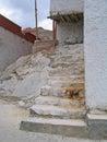 Ladakh, India, una scaletta esterna in un monastero Fotografia Stock