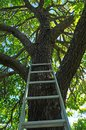 Ladder going up to Tree Royalty Free Stock Photos