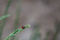 Lady bug on grass Royalty Free Stock Photo