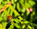 Lady Bug in nature tree Royalty Free Stock Photos