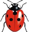 Lady bug nice isolated on white background Royalty Free Stock Photo