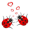 Lady bugs in love Royalty Free Stock Photo