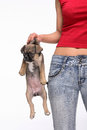 Lady carrying a dog Royalty Free Stock Images