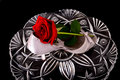 Lady s shoe and rose isolate over black on crystal Stock Photo