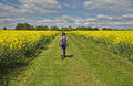 Lady walking between Fields of Yellow Rapeseed Stock Photos