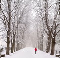 Lady walking in a snow covered boulevard Royalty Free Stock Photo