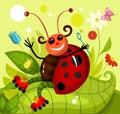 Ladybird Royalty Free Stock Photo