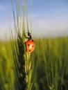 Ladybird Stock Images