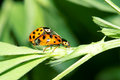 Ladybird beetle Stock Photos